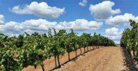 Circuitos por la Rioja